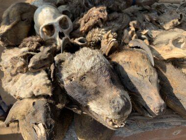 Fetish market skulls